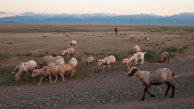 Kazachstán, rok druhý