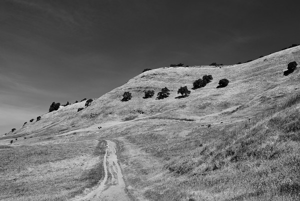 Contra Costa - Oaks and Ridges