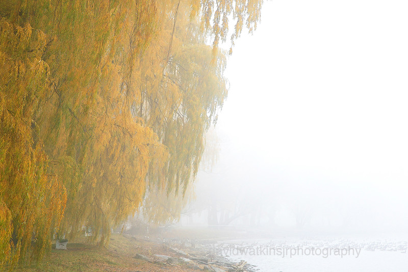 Fog in the Willows No.2.jpg