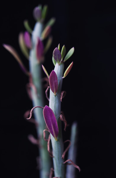succulent ektachrome 64 051720--3.jpg