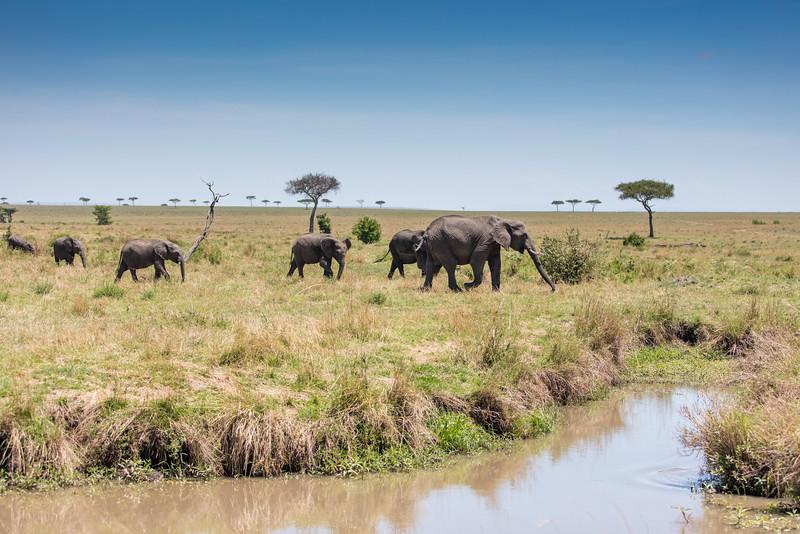 Africa - 101416 - 2465.jpg