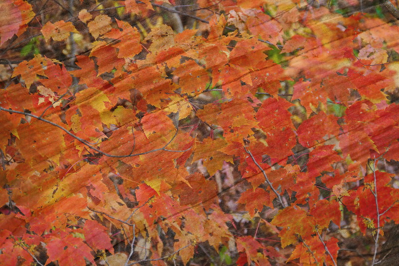 Leaves on wood grain.jpg
