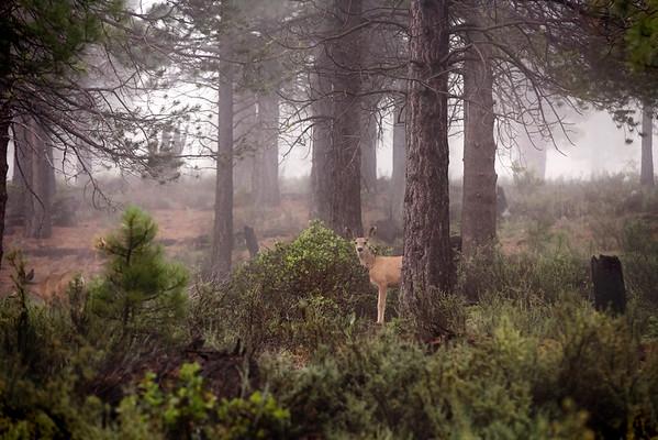 Deer. and. a. Buck.
