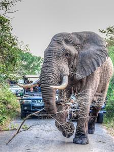 Elephants - Zululand & Swaziland