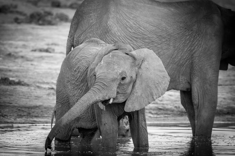 Botswana_June_2017 (4262 of 6179).jpg