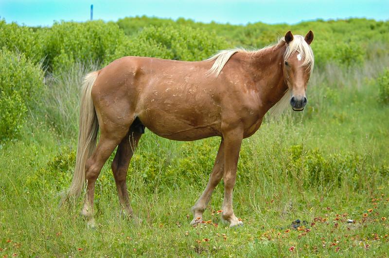 Wild Horse Portrait #1 SB