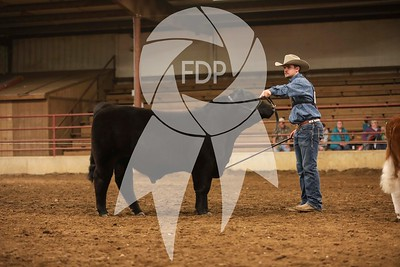 Bull and Steers