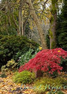 Sara's fall color