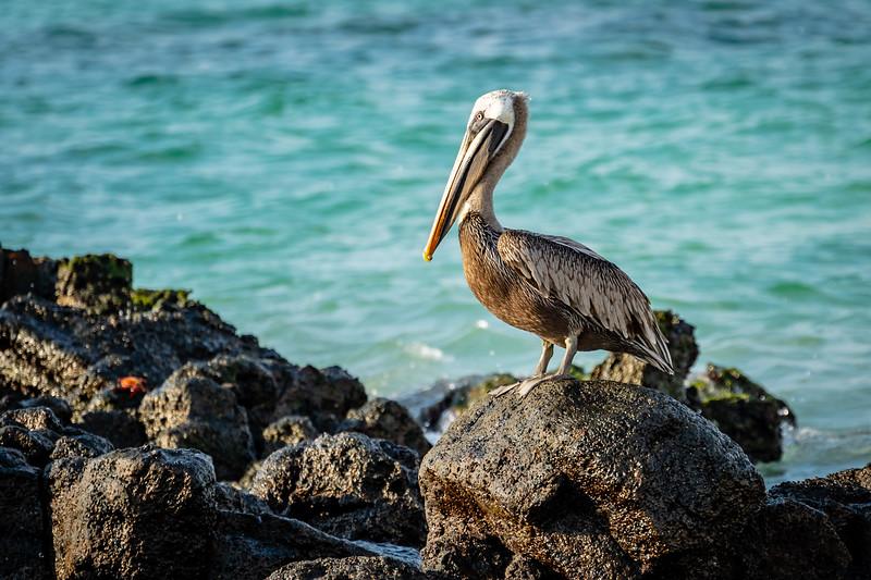 Galapagos-2896-2.jpg
