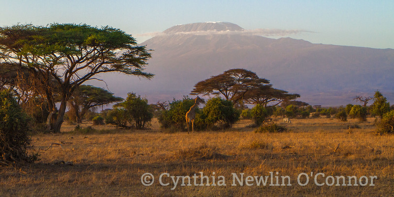 IMG_5864-1 kilimanjaro pano final 2   18 for FB 17 Z.jpeg