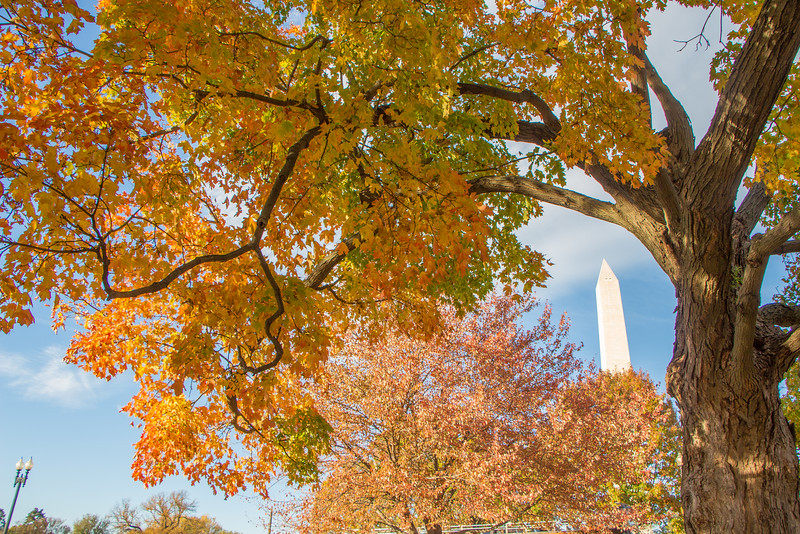 Fall in DC