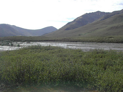 Alaska Highway S of Whitehorse