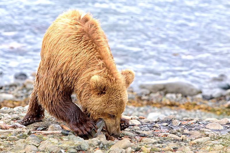 Alaska_2013_FH0T5163.jpg