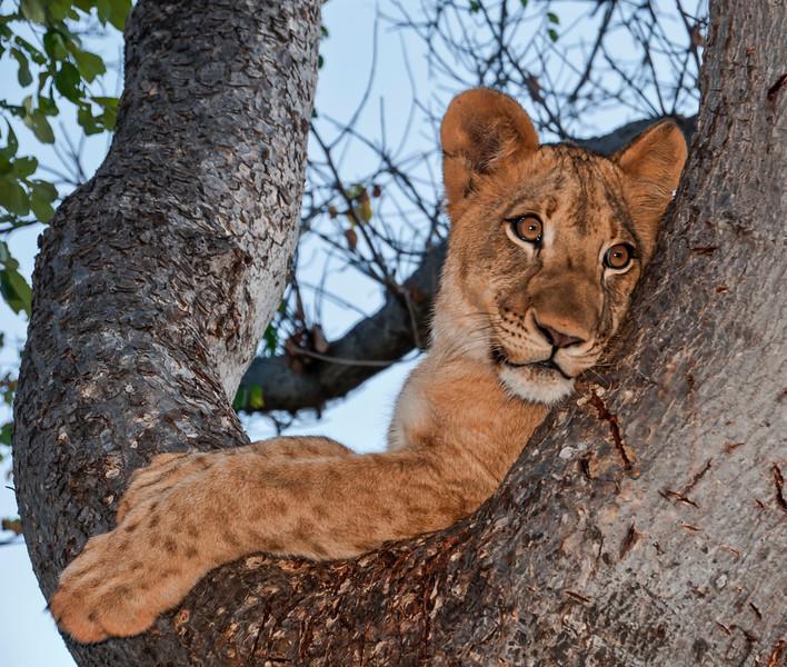 Lion Cubs-9.jpg