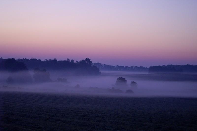 brewster field in mist 1.JPG