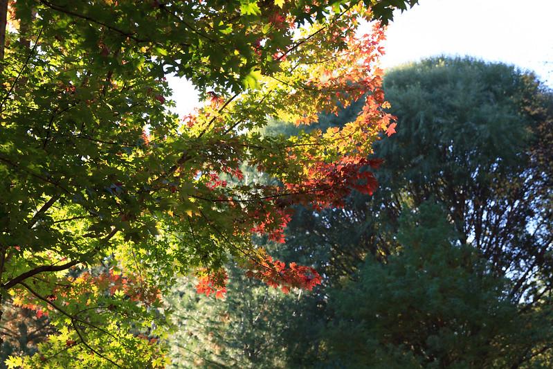 2012_10_ 20 Fall Leaves 004.jpg