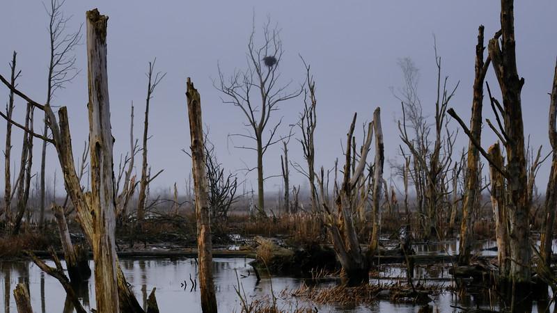 swamp-nest.jpg