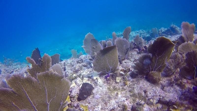 Ciesla-GOPR7593 - KC Coral 1.jpg
