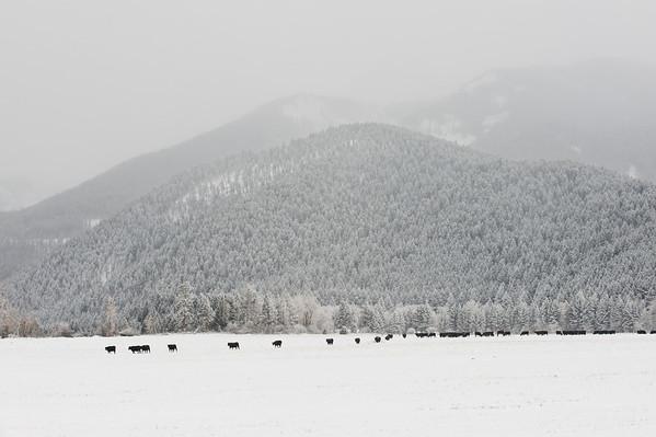 Montana Winter 2009