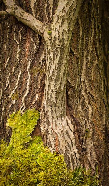 tree 28 .jpg