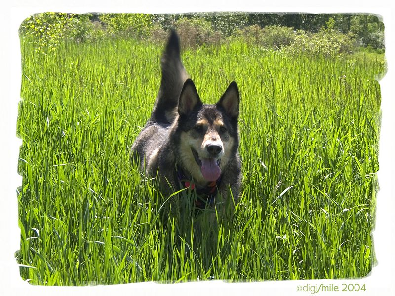 Buddy in the Grass.jpg