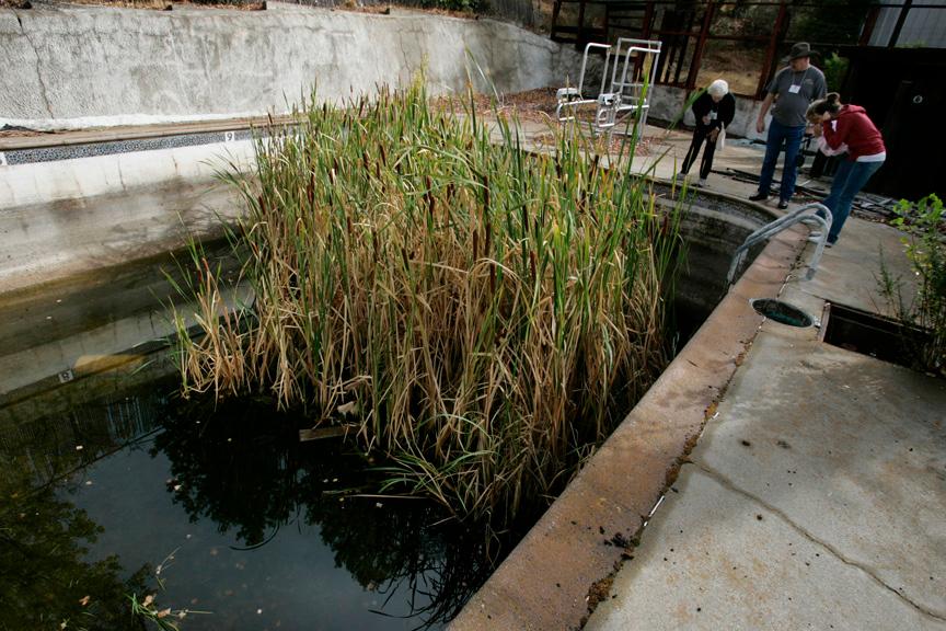 . 2008: Plants grow in the brackish water left in a swimming pool.  (Patrick Tehan/Mercury News)
