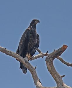Florida 2013, mostly birds