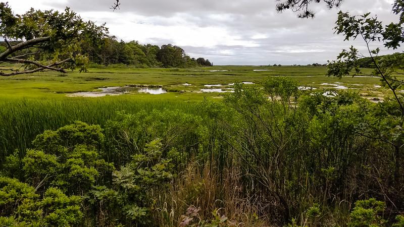 Salt marsh at Silver Spring Harbor