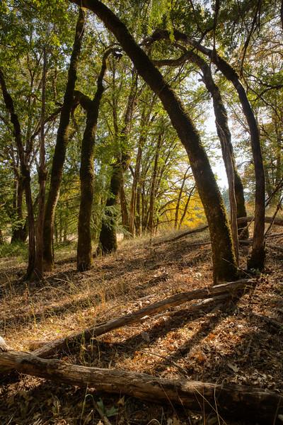 Deep Woods #5