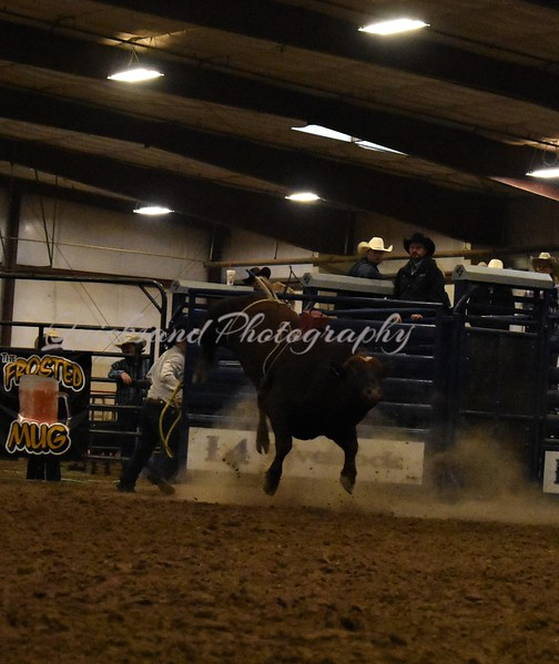 Buckers Finals Belles and Bulls