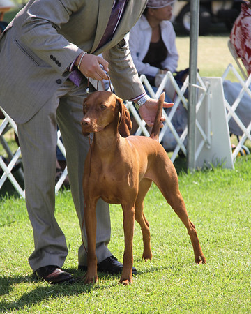 """GCH CH Calibre's Chance To Bear It All JH RN """"Chance"""""""