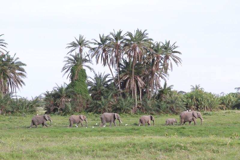 Kenya 2019 #2 553.JPG
