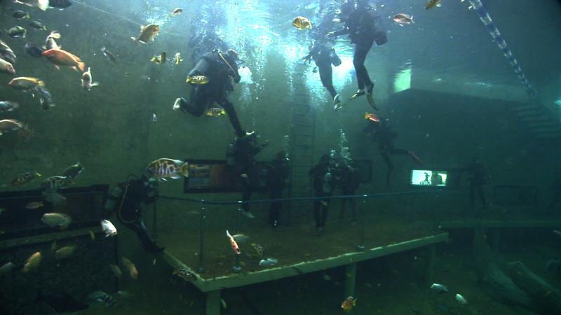 Underwater Walk Edit.00_00_02_18.Still005.jpg