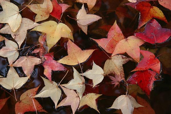 Autumn in Kyoto