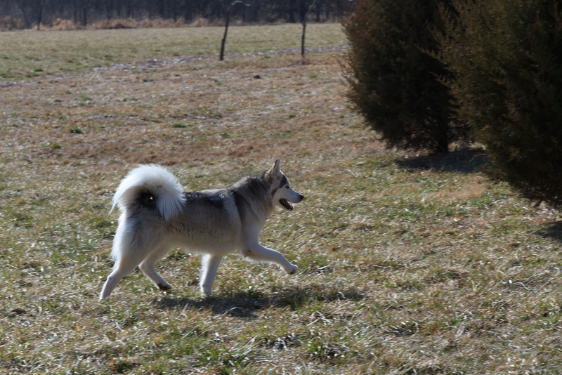 Blue running free at the Ranch