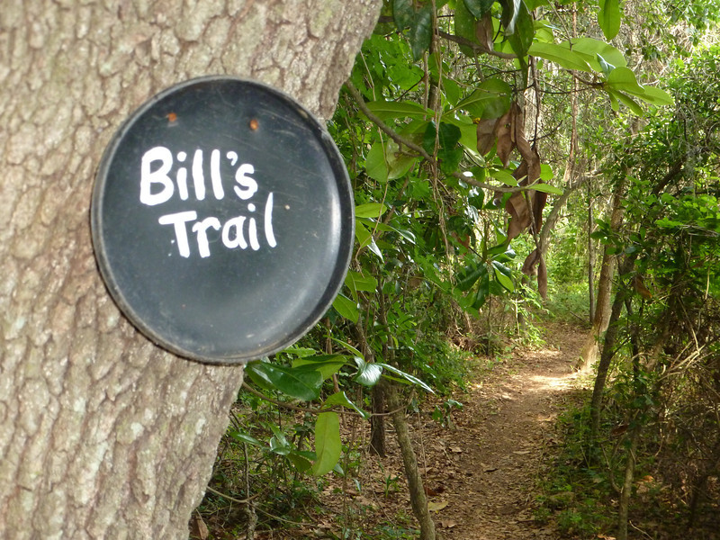 24 May 2014. Bill's Trail, near its west end (behind me). This user created trail allowed access from south of the tracks to Alford Greenway during bridge construction. Also available (as of this typing) is a SCMS highside fenceline option.