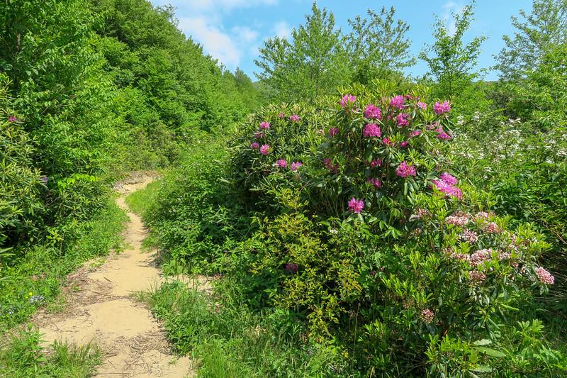Graveyard Ridge/Mountains-to-Sea West Trail Junction -- 5,400'