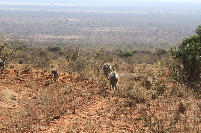 Kenya 2017 #1 3402.JPG