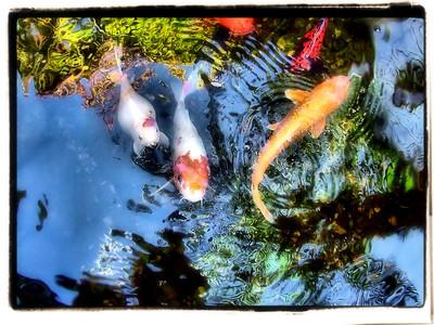 New orleans pond fishin