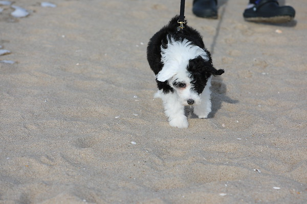 Oslo's First Visit to the Beach!