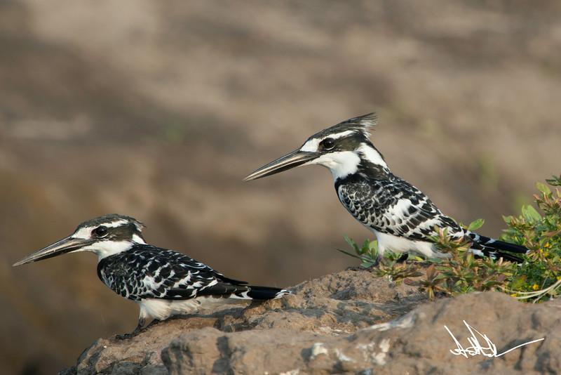 KingfisherS-4.jpg