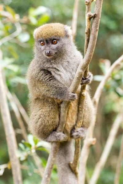 Madagascar_2013_IG3A2394.jpg