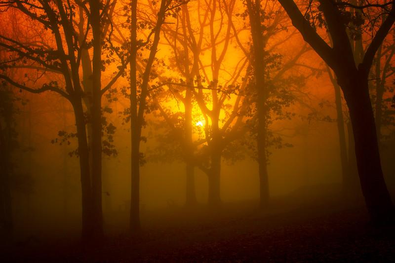 11.24.19 - Prairie Creek Park in the fog.