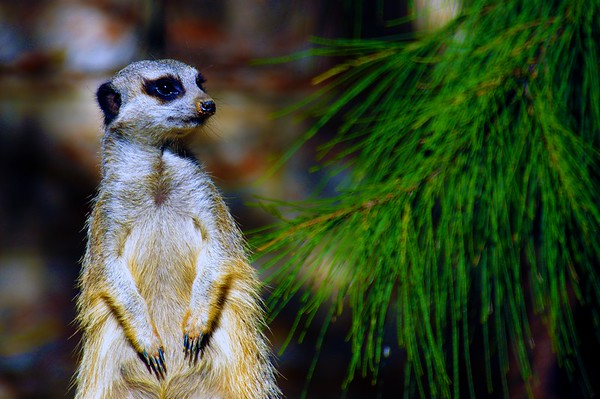National Zoo & Aquarium Canberra