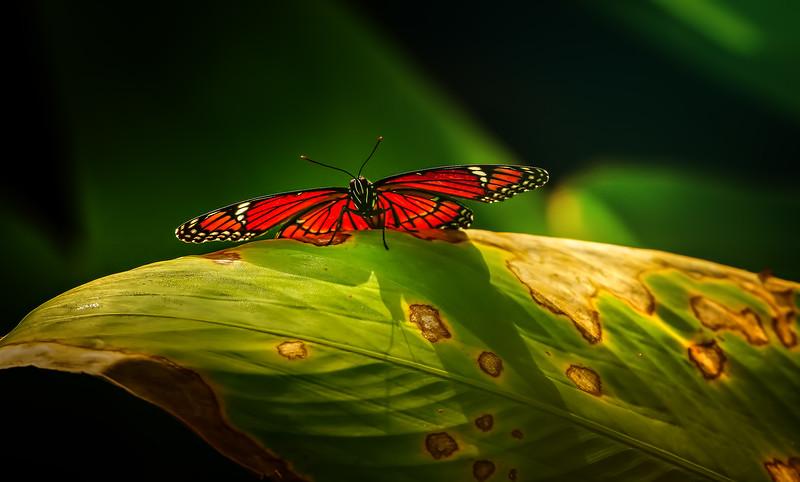 Butterfly-063.jpg