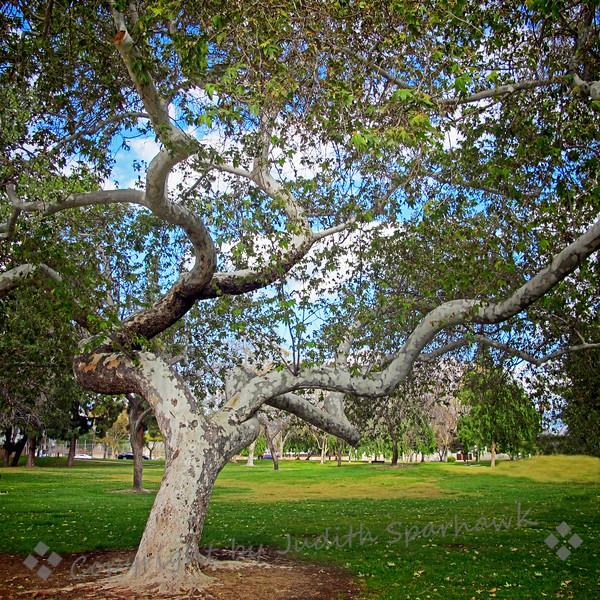 The Big Old Tree - Judith Sparhawk