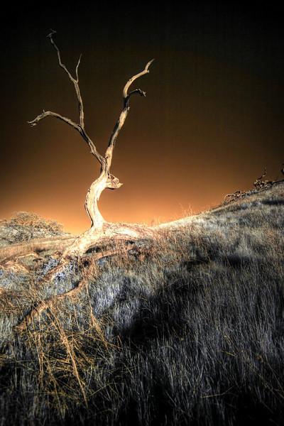 Dead Tree IR HDR