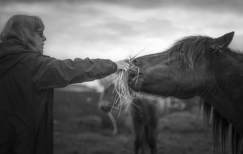 mom-feeding-horse.jpg