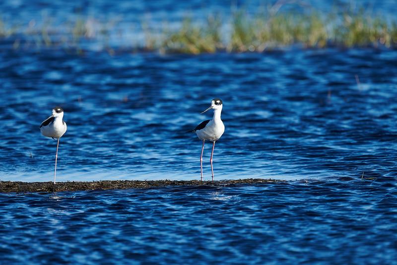 20181103 - Brazoria Wildlife Refuge-85B_4101.jpg