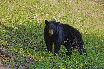 Bears, 5_12,13